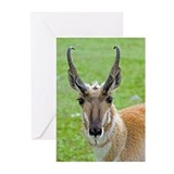 Pronghorn Face Greeting Cards (Pk of 20)