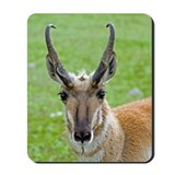 Pronghorn Face Mousepad