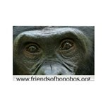 Friends of Bonobos Rectangle Magnet (10 pack)