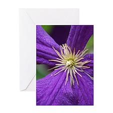 Purple Radiance Greeting Card