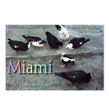 Miami: Great Service/Food - (Package of 8)