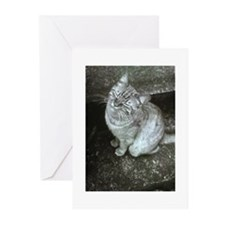 Happy Cat Greeting Cards (Pk of 10)