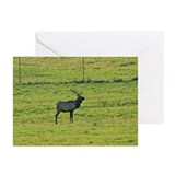 Bull Elk in a Field Greeting Cards (Pk of 10)