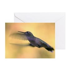 Hummingbird Greeting Cards (Pk of 20)