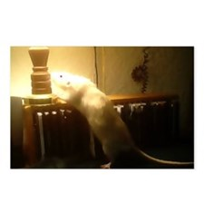 In the light Dumbo Rat Postcards (Package of 8)