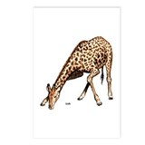 Giraffe African Wildlife Postcards (Package of 8)