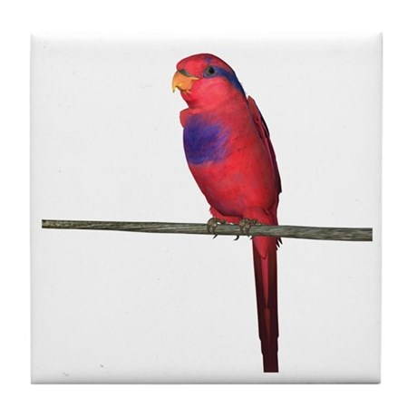Red and Blue Lori Tile Coaster