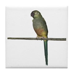 Patagonian Conure Tile Coaster