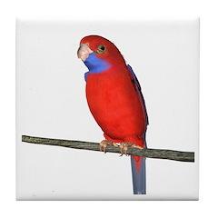 Crimson Rosella Parrot Tile Coaster