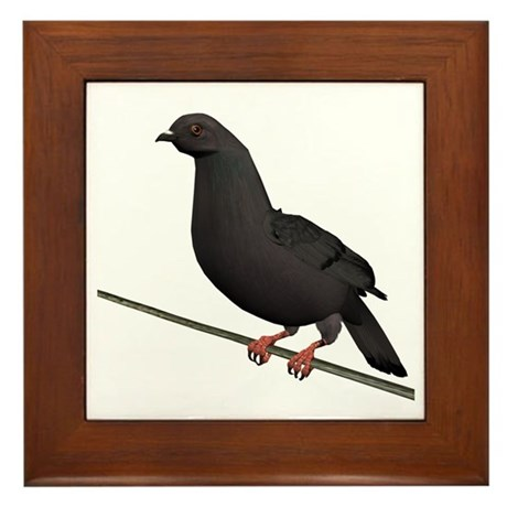 Dark Rock Dove Framed Tile