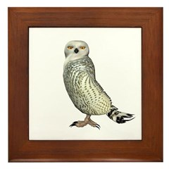 Snow Owl Framed Tile
