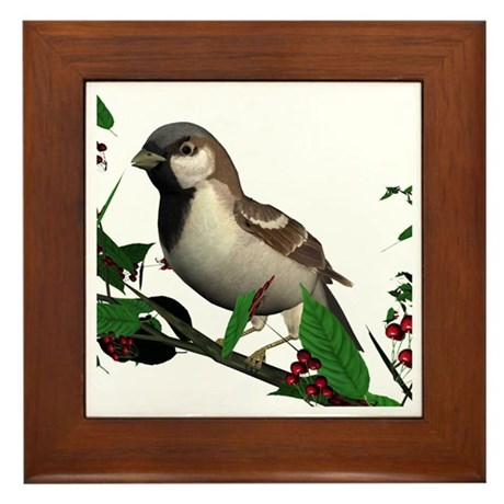 House Sparrow (male) Framed Tile