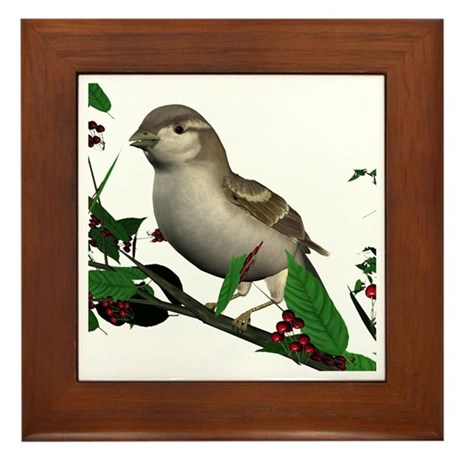 House Sparrow (female) Framed Tile