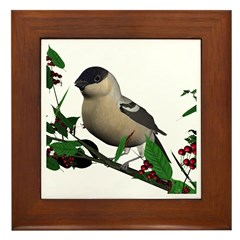 Bullfinch (female) Framed Tile