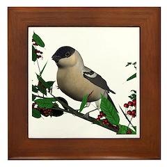 Bullfinch (female) Framed Tile