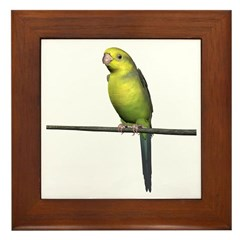 Yellow Faced Parrot Framed Tile