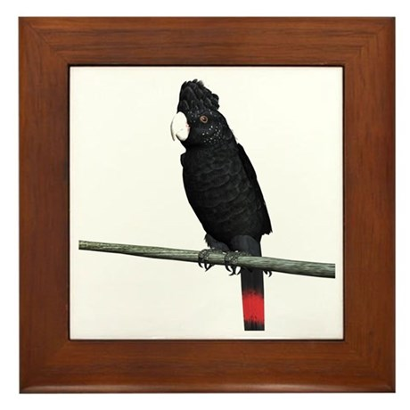 Redtail Black Cockatoo Framed Tile