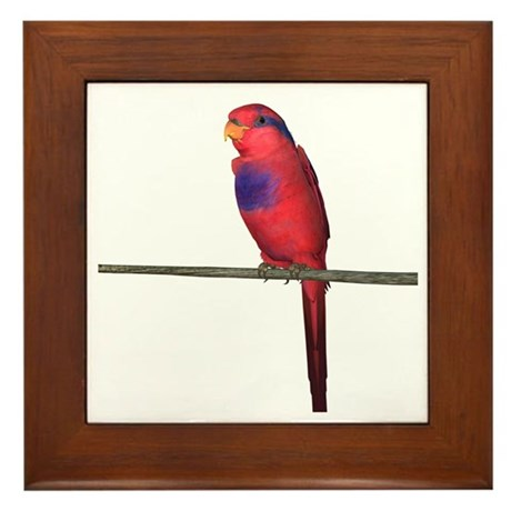 Red and Blue Lori Framed Tile
