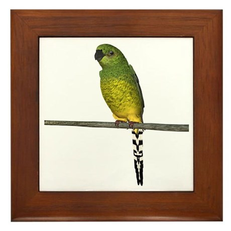 Night Parrot Framed Tile