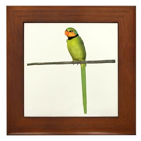 Ring Necked Parakeet Framed Tile