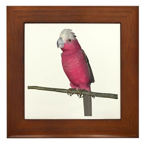 Galah Cockatoo Framed Tile