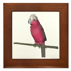 Galah Cockatoo Framed Tile
