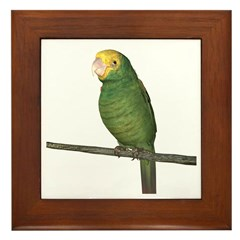 Double Yellow Amazon Parrot Framed Tile