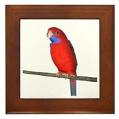Crimson Rosella Parrot Framed Tile
