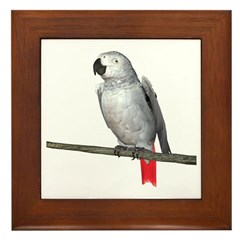 Congo African Grey Framed Tile