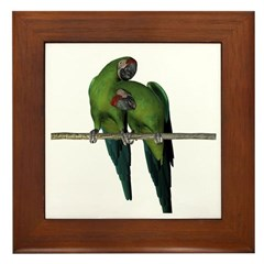 Military Macaw (Pair) Framed Tile