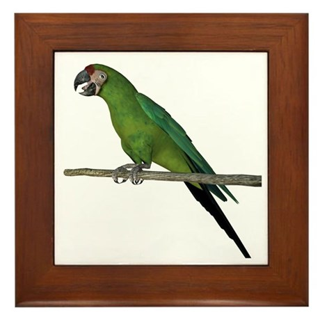 Military Macaw Framed Tile