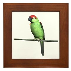 Thick Bill Parrot Framed Tile