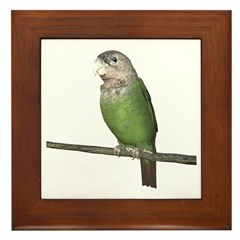Cape Parrot Framed Tile