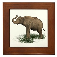 Elephant (baby) Framed Tile
