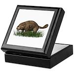 Beaver Keepsake Box