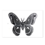 cecropia moth Postcards (Package of 8)