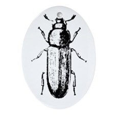 confused beetle Oval Ornament