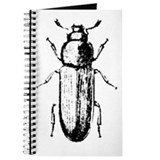 confused beetle Journal
