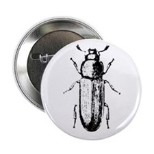 """confused beetle 2.25"""" Button (10 pack)"""