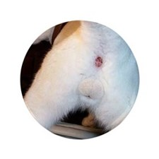 "The cat's ass 3.5"" Button (100 pack)"
