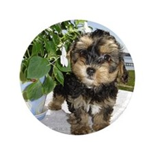 "Yorkiepoo 3.5"" Button (100 pack)"