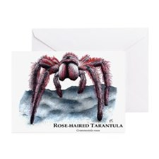 Rose-Haired Tarantula Greeting Cards (Pk of 10)
