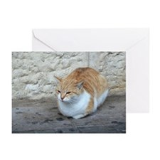Cats of the Holy Land Greeting Cards (Pk of 10)