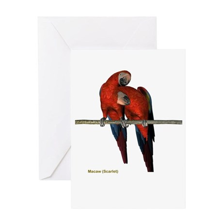 Scarlet Macaw (pair) Greeting Card