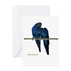Hyacinth Macaw (pair) Greeting Card