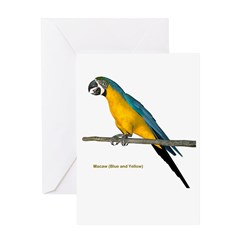 Blue N Yellow Macaw Greeting Card