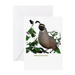 California Quail (male) Greeting Card