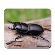 Stag Beetle - Dorcus Mousepad