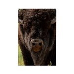 Stand Down Bison Rectangle Magnet (100 pack)