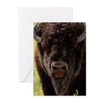 Stand Down Bison Greeting Cards (Pk of 10)